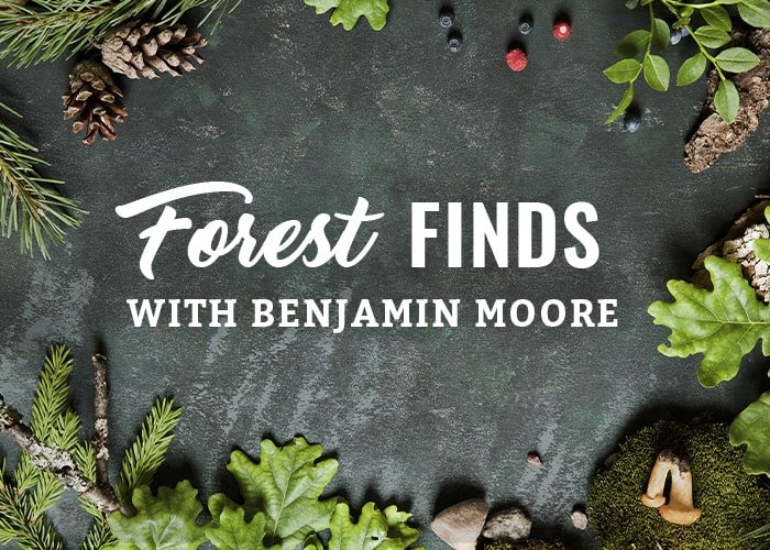 Forest Finds with Benjamin Moore Paint Color Inspiration Blog
