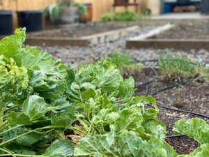 Winterizing your garden tips